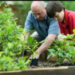 How You Can Become an Expert Gardener
