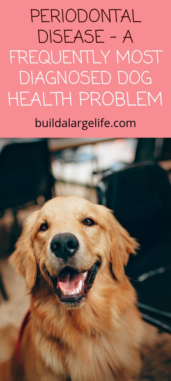 Periodontal Disease - A Frequently Most Diagnosed Dog Health Problem